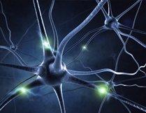 EMG/Nerve Conduction Study